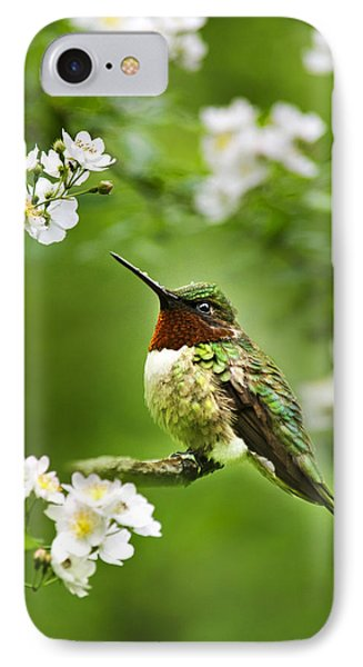 Fauna And Flora - Hummingbird With Flowers IPhone Case by Christina Rollo