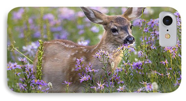 Fawn In Asters IPhone Case by Sonya Lang
