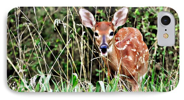 Fawn In The Grass Phone Case by Marty Koch