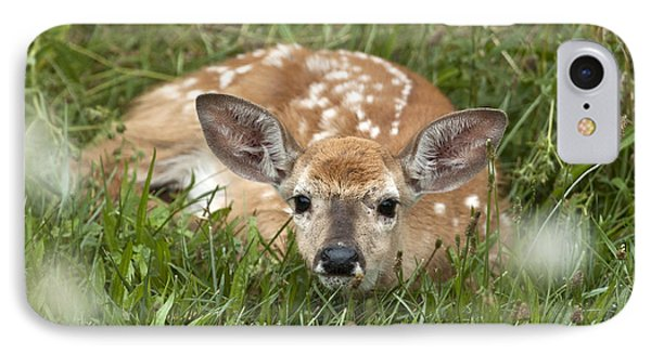 Fawn IPhone Case by Jeannette Hunt