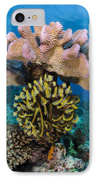 Feather Star Rainbow Reef Fiji IPhone Case by Pete Oxford