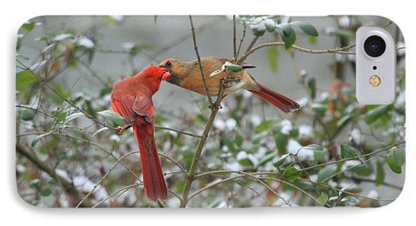 Feeding Cardinals Phone Case by Geraldine DeBoer