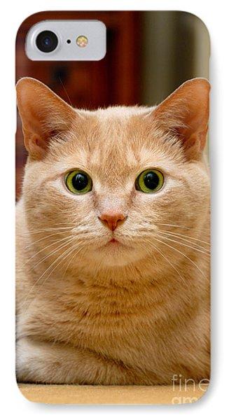 Feline Portrait Phone Case by Amy Cicconi