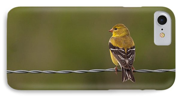 Female American Goldfinch Phone Case by Douglas Stucky