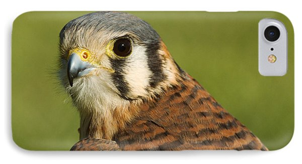 IPhone Case featuring the photograph female American Kestrel by Doug Herr