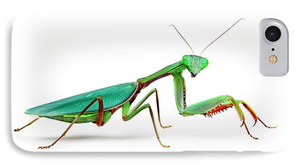 Female Australian Giant Rainforest Mantis IPhone Case by Alex Hyde