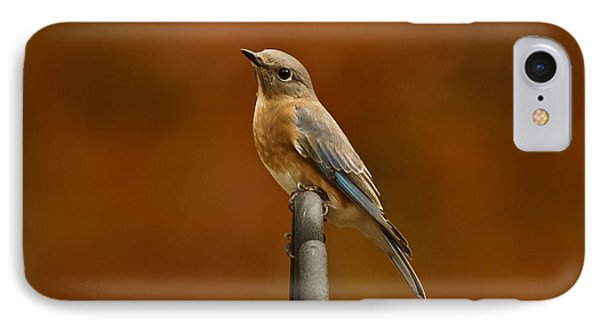 IPhone Case featuring the photograph Female Bluebird by Robert L Jackson