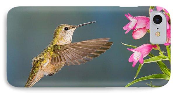 Female Broad-tailed Hummingbirds Phone Case by Anthony Mercieca