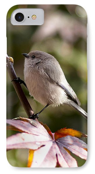 Female Bushtit IPhone Case by Betty Depee