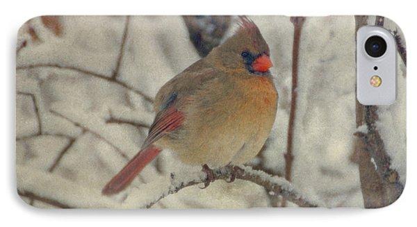 Female Cardinal In The Snow II IPhone Case
