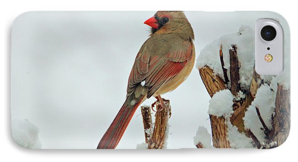 Female Cardinal In The Snow Phone Case by Sandy Keeton