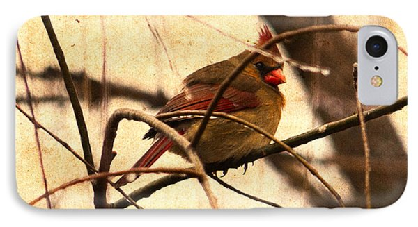 Female Cardinal In The Winter Willow IPhone Case