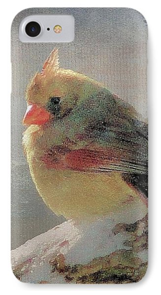 Female Cardinal V Phone Case by Janette Boyd