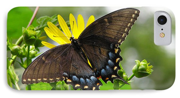 IPhone Case featuring the photograph Female Dark Form Swallowtail Butterfly  by Eva Kaufman