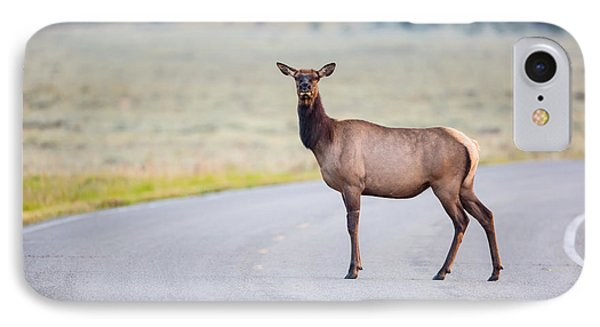 Female Elk Crossing The Road At Yellowstone IPhone Case