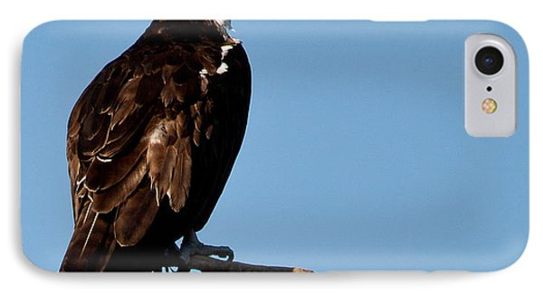 Female Florida Osprey IPhone Case by Michelle Wiarda