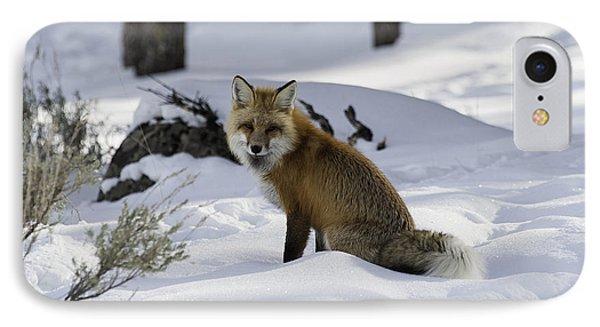 Female Fox IPhone Case