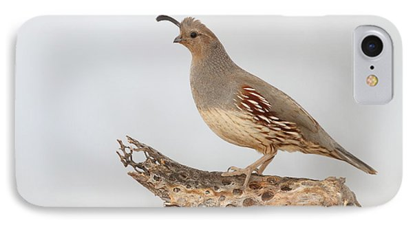 Female Gambel's Quail IPhone Case