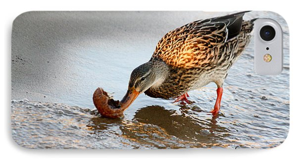 Female Mallard Duck  IPhone Case by Ann Murphy
