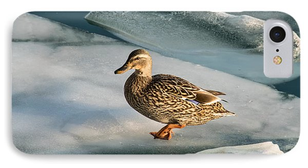Female Mallard In A Cold World IPhone Case