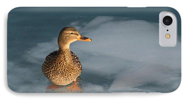 Female Mallard In Icy Water IPhone Case by Gerda Grice