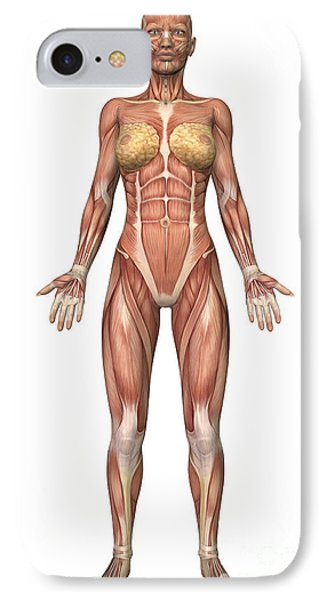Female Muscular System, Front View Phone Case by Stocktrek Images