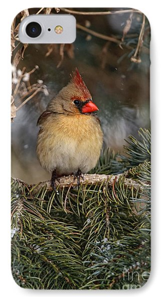 Female Norther Cardinal IPhone Case