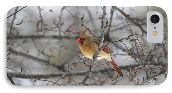 Female Northern Cardinal IPhone Case