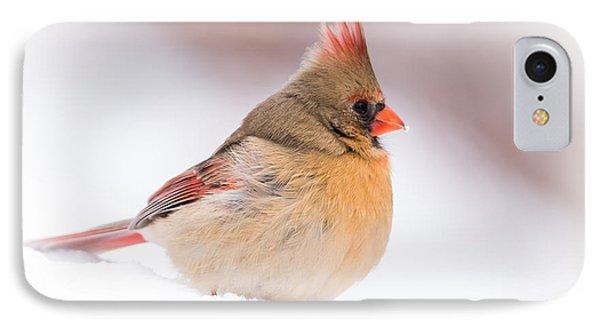 Female Northern Cardinal IPhone Case