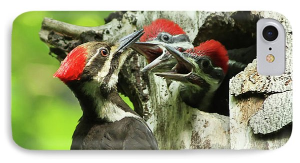 Female Pileated Woodpecker At Nest IPhone Case