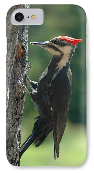 Female Pileated Woodpecker Phone Case by Sandra Updyke