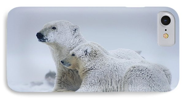 Female Polar Bear Resting With Her Two IPhone Case by Steven Kazlowski