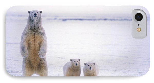 Female Polar Bear Standing With Her Two IPhone Case by Steven Kazlowski