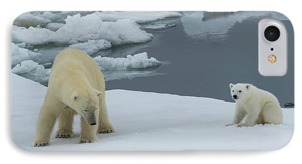 Female Polar Bear Ursus Maritimus IPhone Case