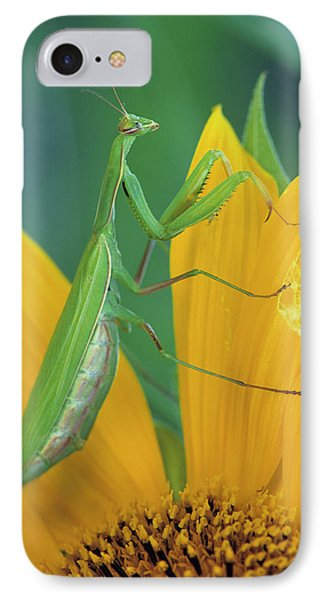 Female Praying Mantis With Egg Sac IPhone Case by Jaynes Gallery