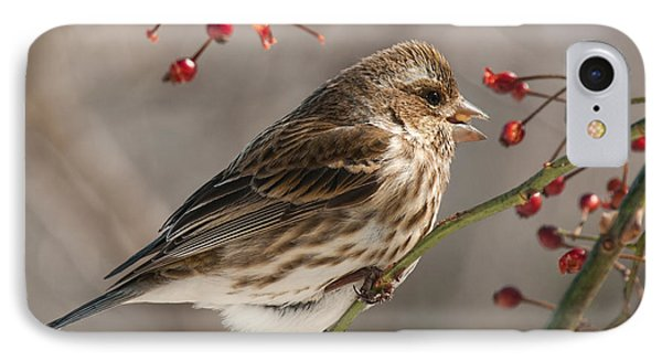 IPhone Case featuring the photograph Female Purple Finch On Berries by Lara Ellis