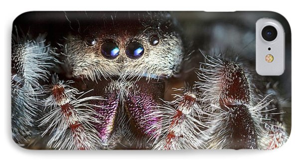 Female Regal Jumping Spider IPhone Case