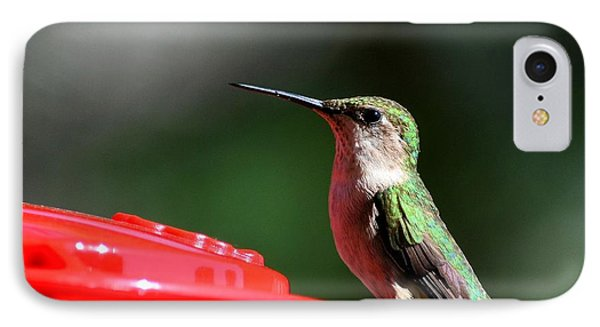 Female Ruby Throat At Feeder IPhone Case