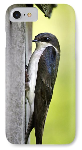 Tree Swallow On Nestbox IPhone Case by Christina Rollo