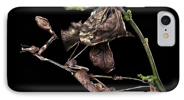 Female Violin Mantis IPhone Case by Alex Hyde