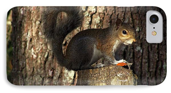 IPhone Case featuring the photograph Fence Post Squirrel  by Chris Mercer