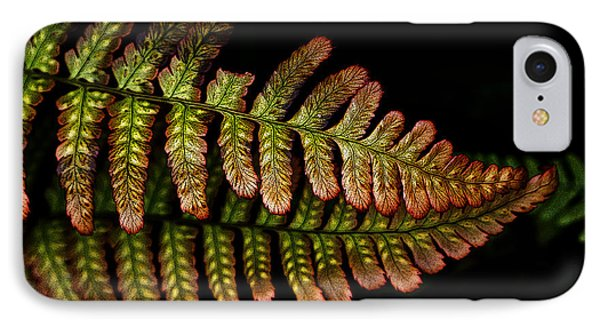 IPhone Case featuring the photograph Fern by Sonya Lang