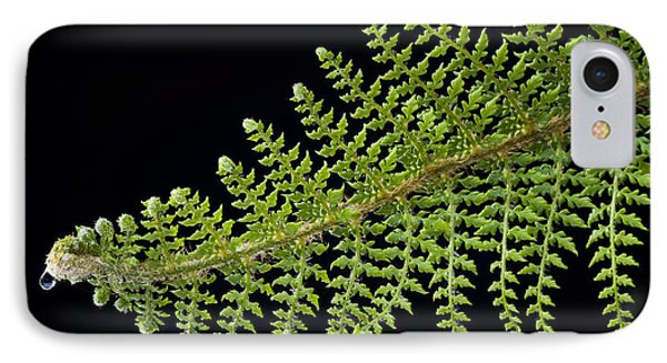 Fern With Raindrop 2 IPhone Case by Trevor Chriss