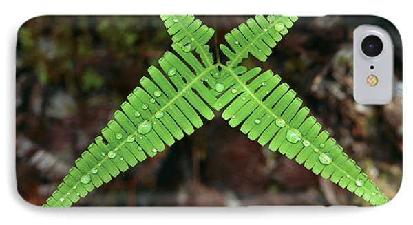 Fern With Water Drops IPhone Case by Thomas Marent