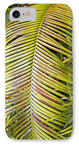 IPhone Case featuring the photograph Ferns by Kate Brown