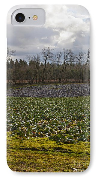 IPhone Case featuring the photograph Field Of Color 2 by Belinda Greb