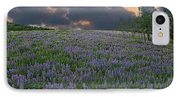 Field Of Lupine IPhone Case by Ed Hall