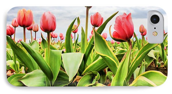 Field Of Pink Tulips IPhone Case by Athena Mckinzie