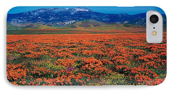 Field, Poppy Flowers, Antelope Valley IPhone Case by Panoramic Images