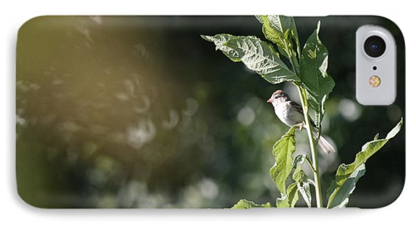 Field Sparrow IPhone Case by Melinda Fawver